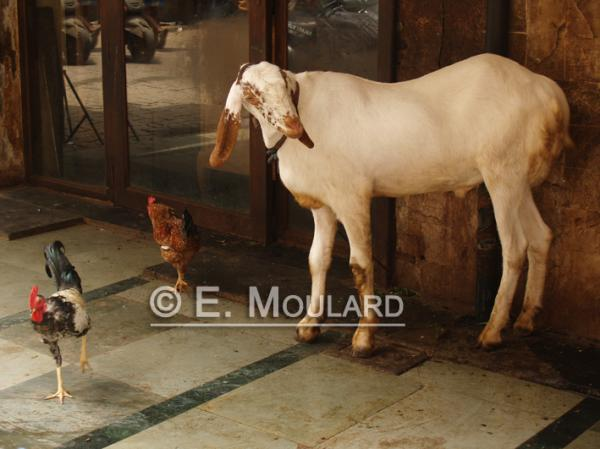 A Sunday in Chor Bazar 3