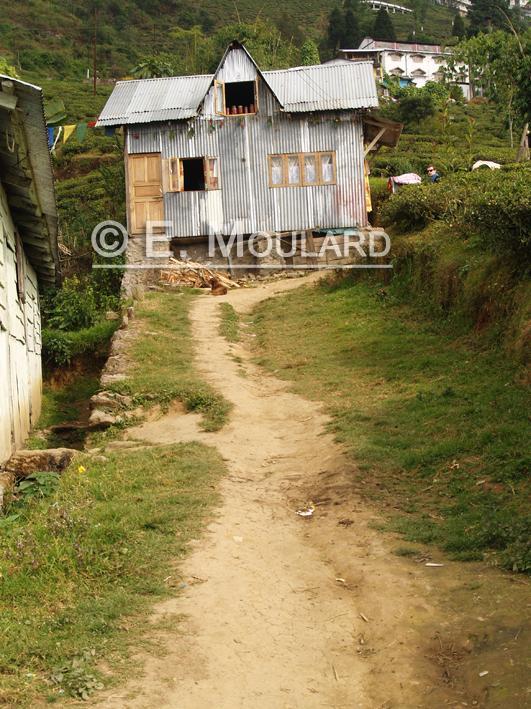 La petite maison dans les tea plantations
