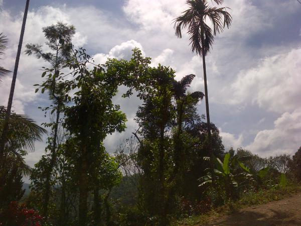 145 - Once upon a time in Coorg...