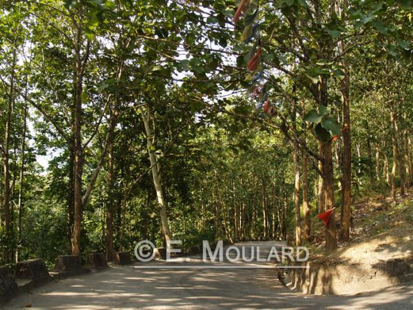 Sur la route du Sikkim, la forêt!
