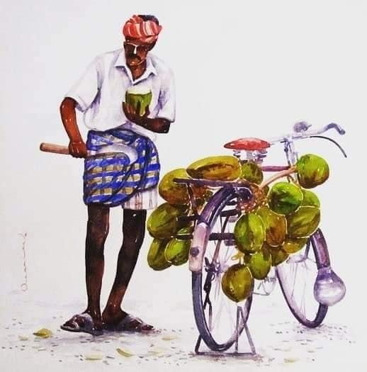 L'Inde en dessins 18 Vendeur de noix de coco