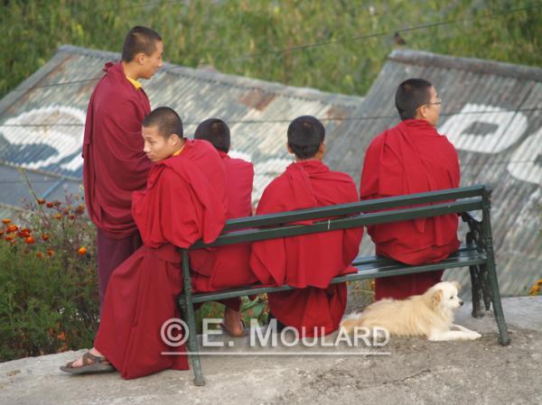 Les 5 moines et le chien