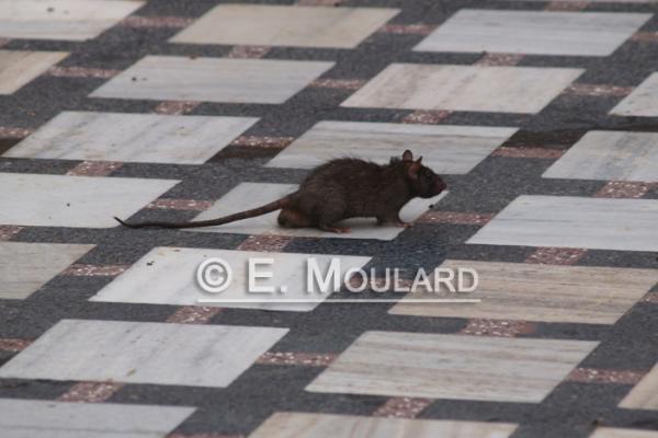 A ne pas rat-er 3