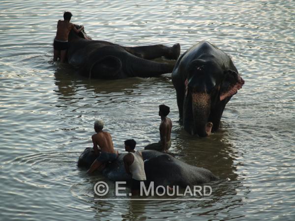 La baignade des éléphants à Amber Fort