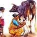 L'Inde en dessins 15 Traite de la vache