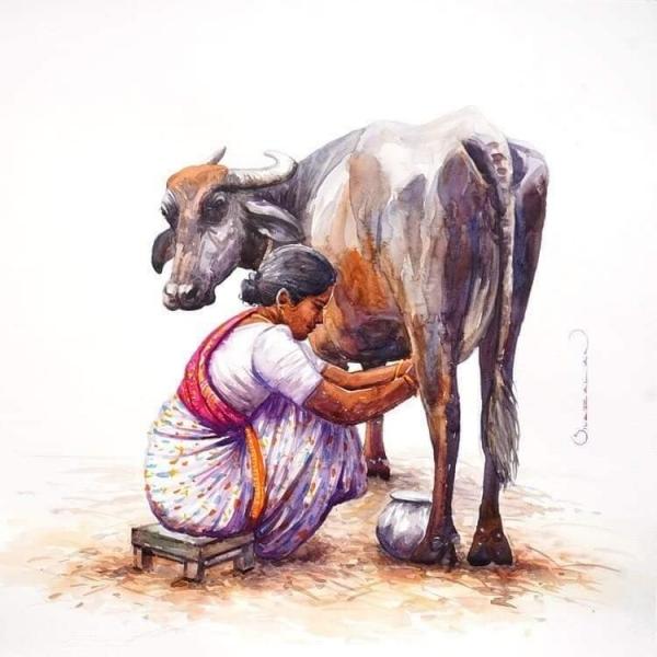 L'Inde en dessins 11 Traite de la vache