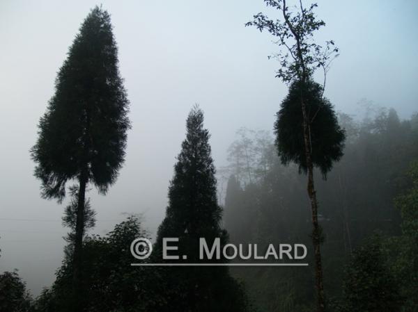 Sur la route de Darjeeling bis