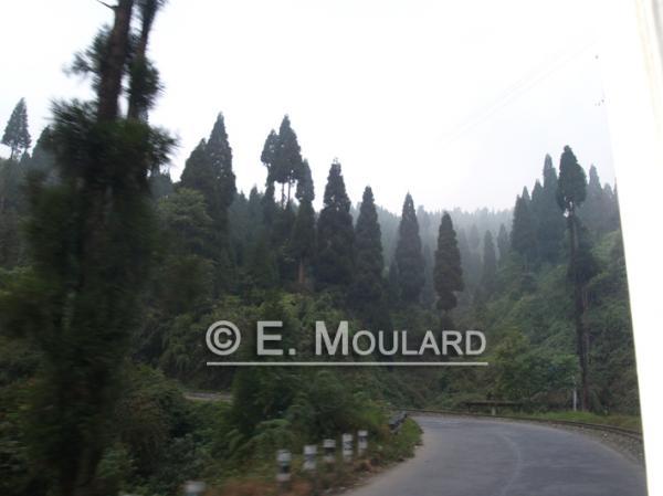 Sur la route de Darjeeling