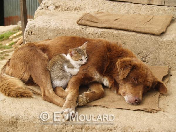 L'instant Royal Canin à Darjeeling