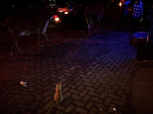 56 - In the streets of Khar at night